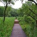 写真: 小網代の森