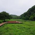 Photos: 小網代の森