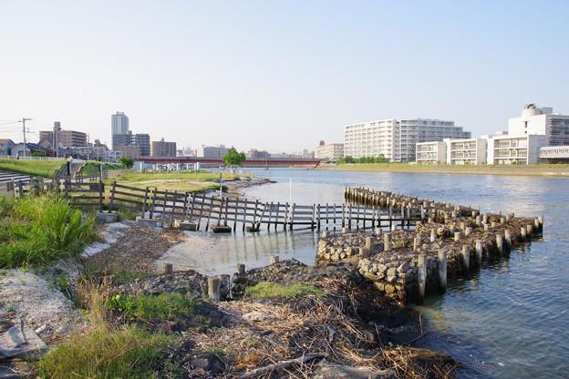 鶴見川河口干潟
