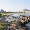 写真: 鶴見川河口干潟