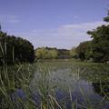 秋色の三ッ池公園