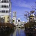 写真: 紅葉の大岡川