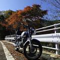 写真: 紅葉の林道ツーリング