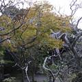 Photos: 東慶寺の紅葉