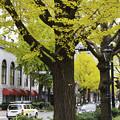 Photos: 初冬の山下公園通り