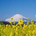 写真: 吾妻山公園より
