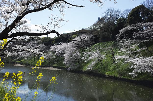 Photos: 春満開