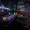 Photos: 大岡川の桜