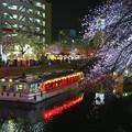 桜まつりの夜
