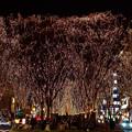 Photos: 仙台光のページェント