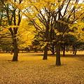 Photos: 代々木公園の森(その3)