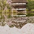 聚楽園 桜10