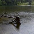 写真: 雨の明神池