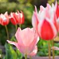 淡いピンク色の君に心魅かれました