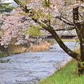 写真: 春らしい風景