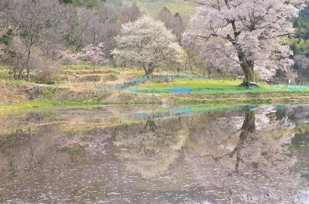 写真: 淡い春