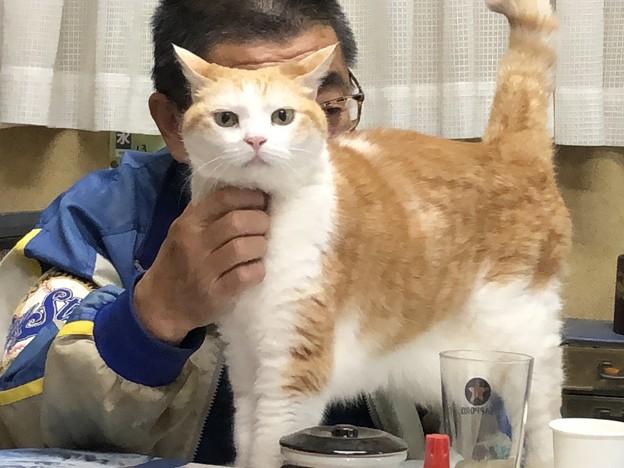 顎で飼い主を使う猫