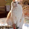 Photos: 松もとれて  後は福招き猫?あたし?はぁ?