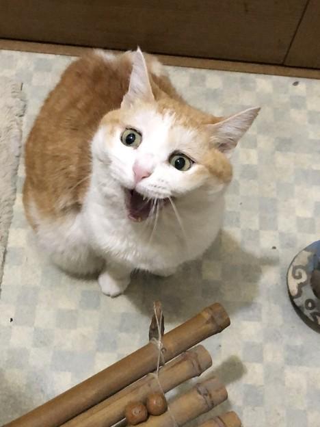 猫の日?「はぁ!?」