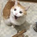写真: 猫の日?「はぁ!?」