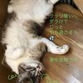 Photos: たらの暑中お見舞い