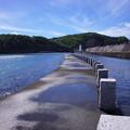 写真: 母島の朝 2