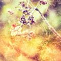 写真: 冬の華(冬枯れの君 加工Ver)
