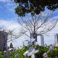 写真: 春さんぽ