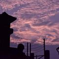 Photos: 夏の夕雲