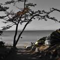 Photos: 一色海岸