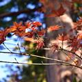 Photos: 円覚寺の紅葉