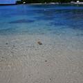 Photos: 海面の枯葉