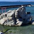 Photos: 海の鳥居