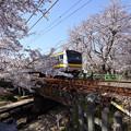 Photos: さくら電車