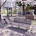 Photos: 春のベンチ