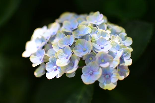 虹色ブルー