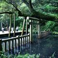 鹿島神宮御手洗池