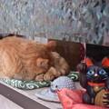 Photos: これがホントの眠り猫