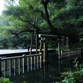 朝の御手洗池@鹿島神宮