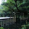 Photos: 朝の御手洗池@鹿島神宮