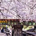 Photos: sakura線路