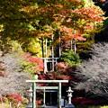 Photos: 半僧坊へ