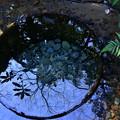 Photos: 清正の井戸
