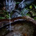 Photos: 水琴窟の龍2
