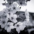 写真: P4080955-Edit