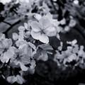 写真: P4081004-Edit