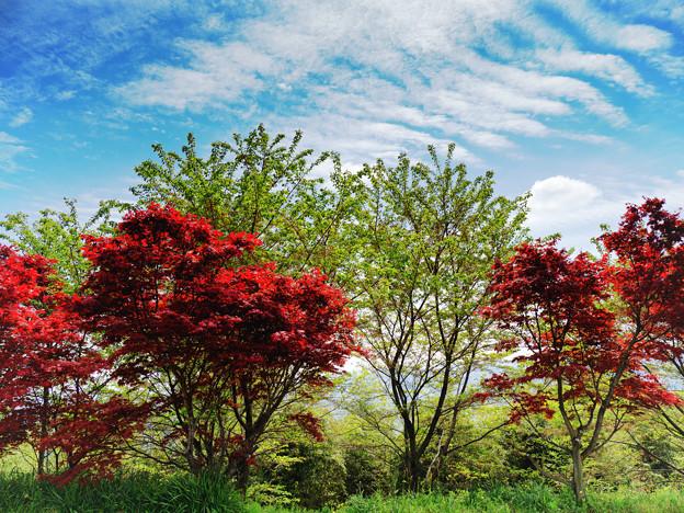 写真: P4220305-Edit