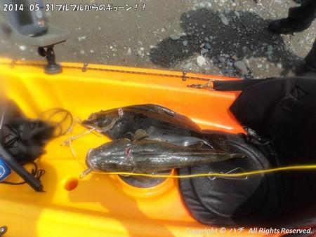 2014-05-31プルプルからのギューン!! (13)