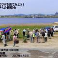 Photos: 砂地のいきもの観察会