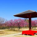 写真: 神崎梅園